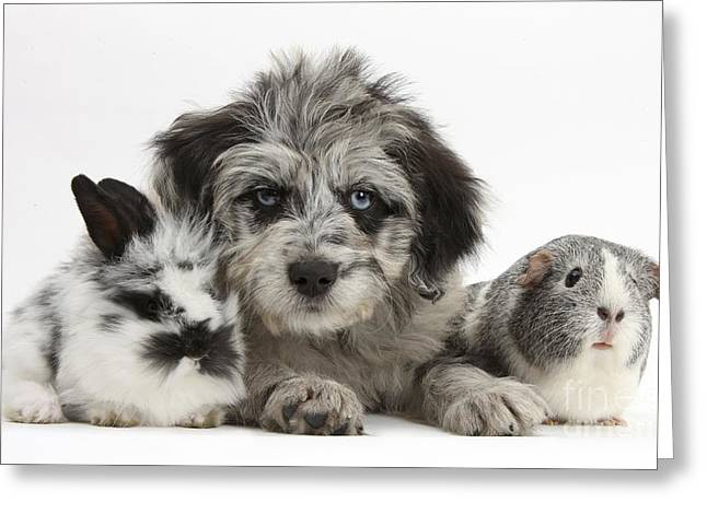 Puppy, Guinea Pig And Rabbit Greeting Card
