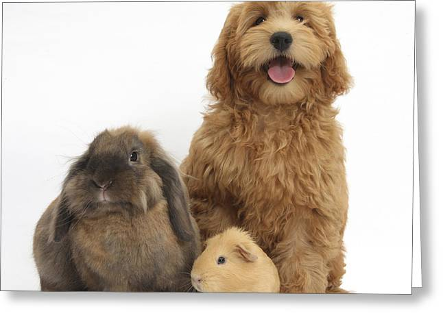 Puppy, Rabbit And Guinea Pig Greeting Card by Mark Taylor