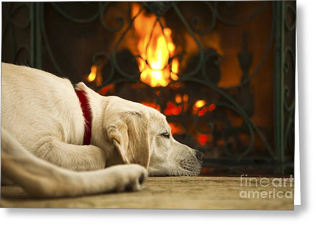 Puppy Sleeping By The Fireplace Greeting Card