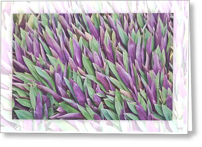 Purple And Green Greeting Card by Holly Kempe