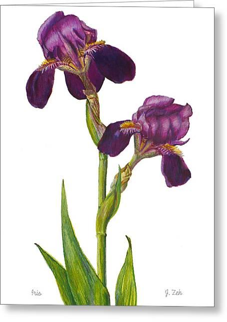 Purple Bearded Iris Greeting Card