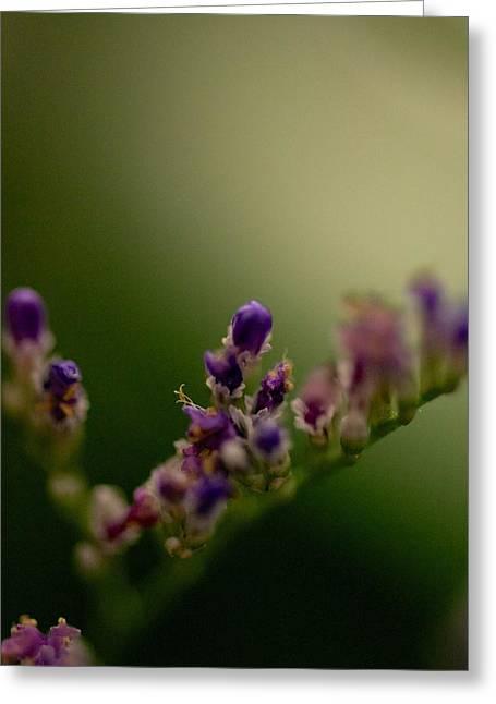 Purple Bud Greeting Card