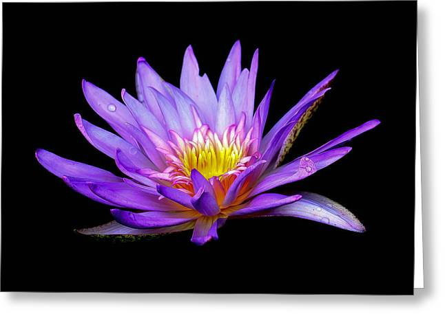 Purple Lilly Greeting Card