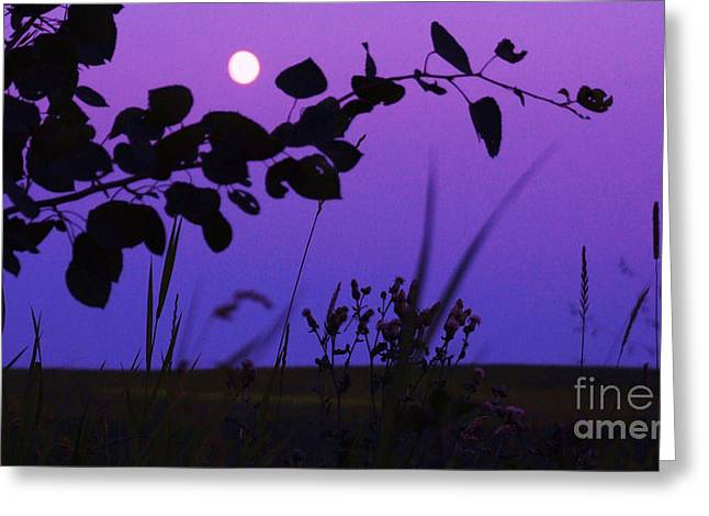 Purple Moon Greeting Card by Marianne NANA Betts