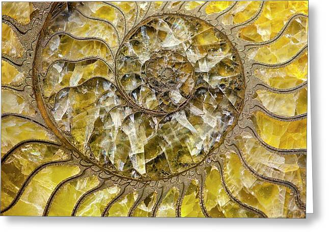 Pyrites Ammonite Spiral Calcite Crystals Greeting Card by Paul D Stewart