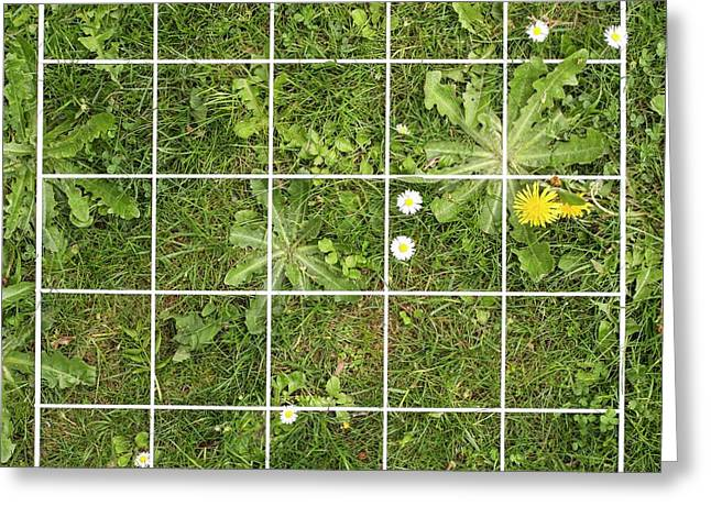 Quadrat On A Lawn With Weeds Greeting Card