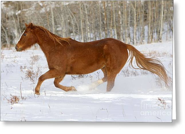 Quarterhorse In Snow Greeting Card by M. Watson