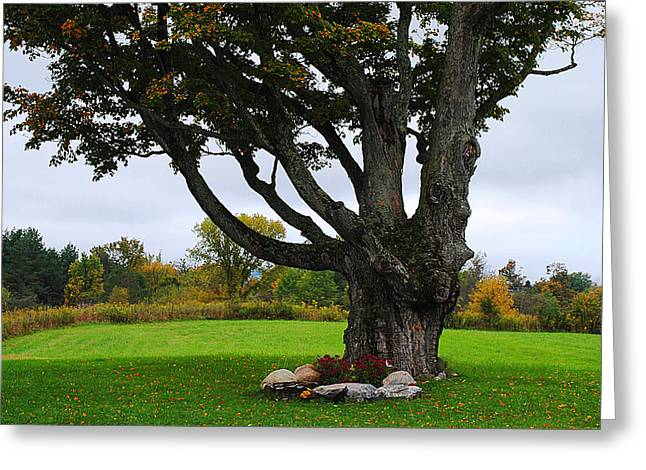 Quiet Tree Greeting Card by Stephanie Grooms