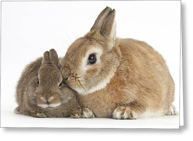 Rabbit And Baby Rabbit Greeting Card by Mark Taylor