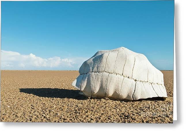 Radiated Tortoise Shell In A Desert Greeting Card by Alexis Rosenfeld