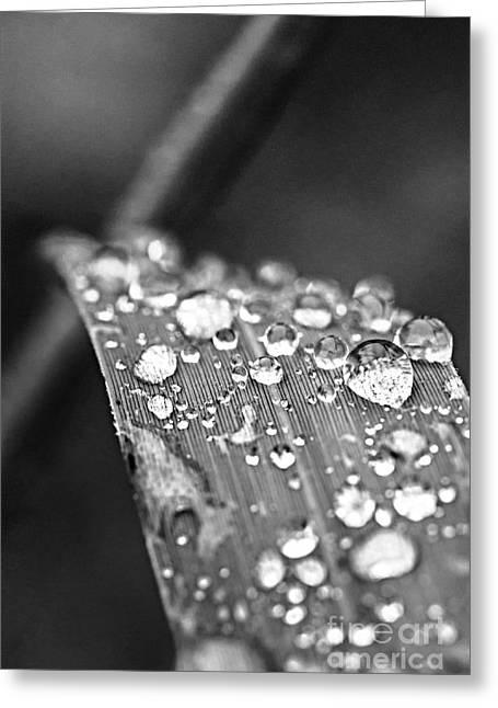 Raindrops On Grass Blade Greeting Card