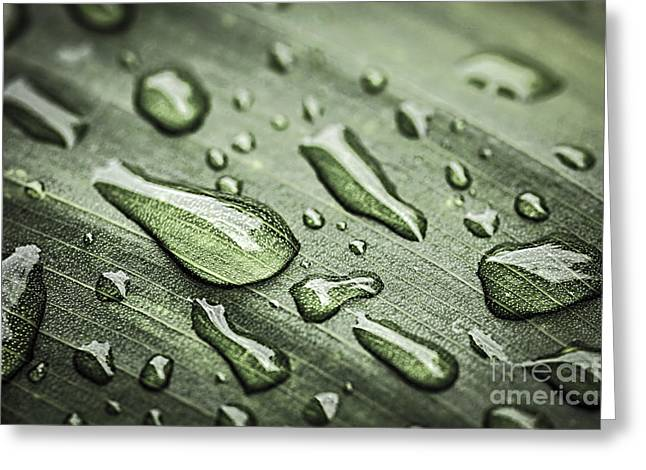 Raindrops On Leaf Greeting Card by Elena Elisseeva