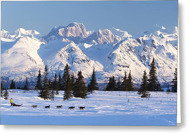 Recreational Dog Mushing In Denali Greeting Card by Jeff Schultz