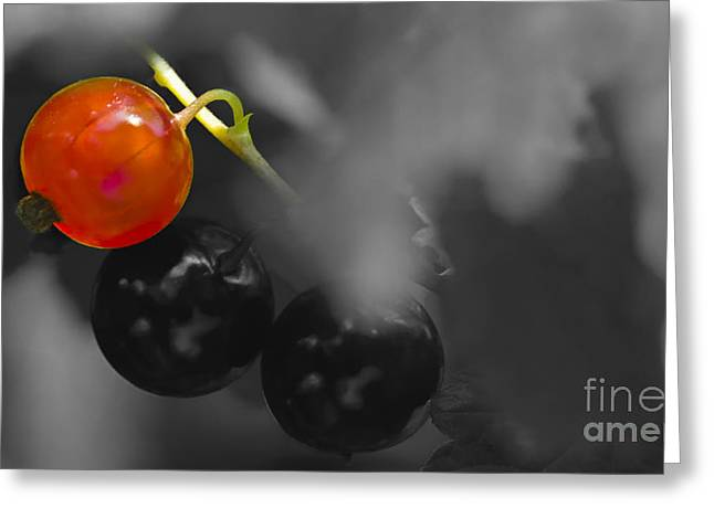Red Currant Fruit Splash Color Greeting Card by Heiko Koehrer-Wagner