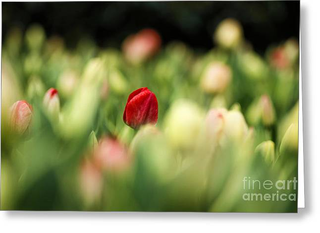 RED Greeting Card by Darren Fisher