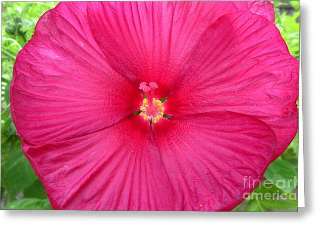 Red Hibiscus Series 2 Greeting Card