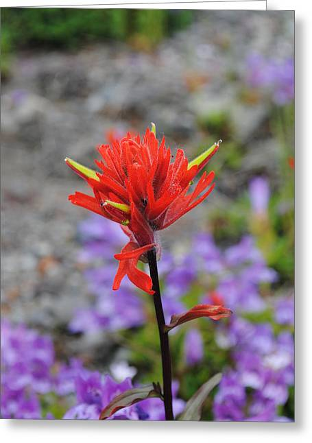 Red Paintbrush  Greeting Card by Robert  Moss