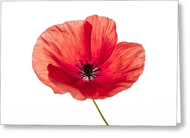 Red Poppy Flower Greeting Card by Elena Elisseeva