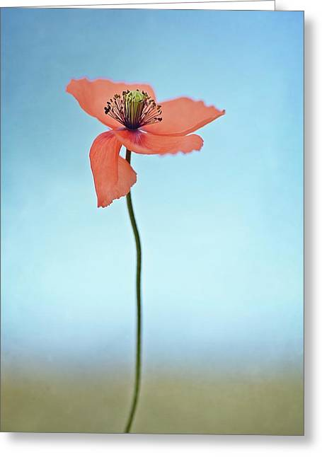 Red Poppy Greeting Card by Lotte Gr?nkj?r