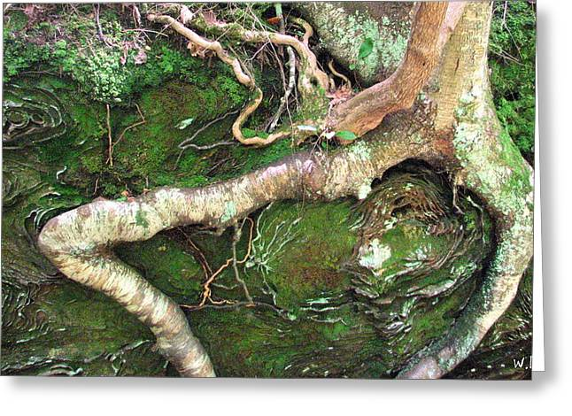 Red River Gorge Greeting Card
