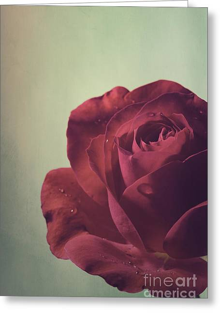 Red Rose Greeting Card by Jelena Jovanovic