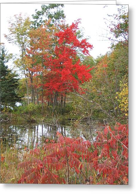 Red Tree Greeting Card by Margaret McDermott