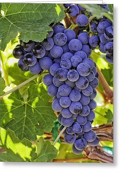 Red Wine Grapes Hanging On The Vine Greeting Card by Teri Virbickis