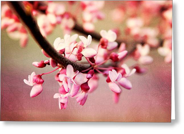 Greeting Card featuring the photograph Redbud Blossoms by Trina  Ansel