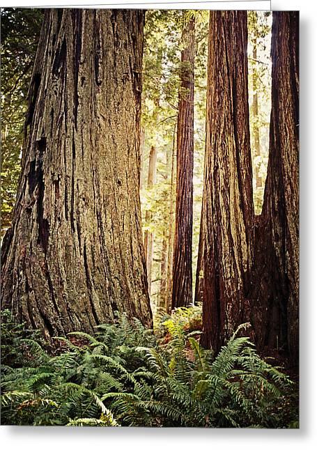 Redwoods Greeting Card by Scott Pellegrin