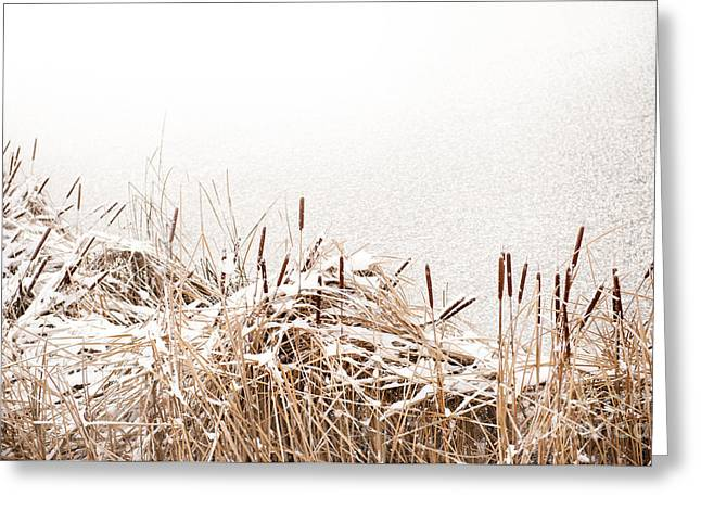 Snow On Coastal Typha Reeds In Park  Greeting Card by Arletta Cwalina