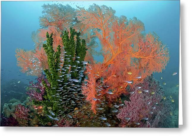 Reef Scenics, Raja Ampat Islands, Irian Greeting Card by Jaynes Gallery