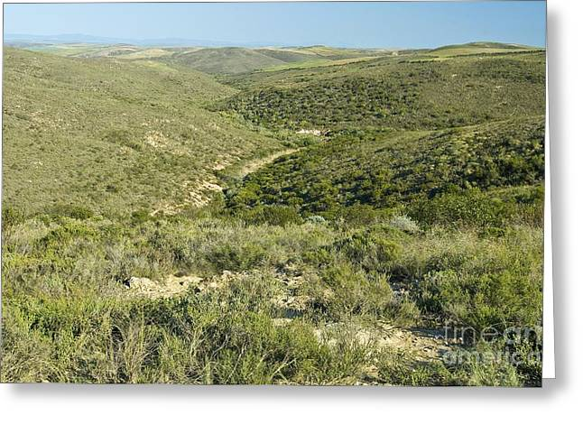 Renosterveld Conservation Area Greeting Card