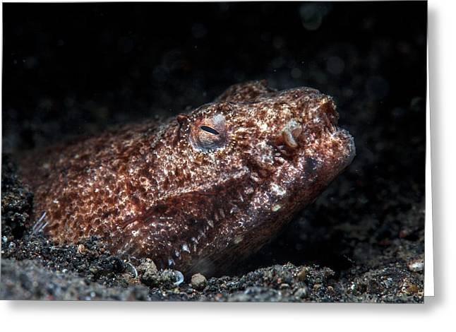 Reptilian Snake Eel Greeting Card by Ethan Daniels