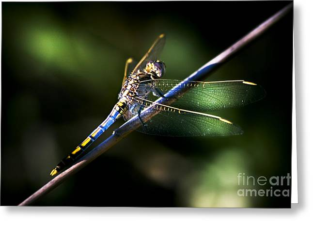 Resting Dragonfly Greeting Card by Jorgo Photography - Wall Art Gallery
