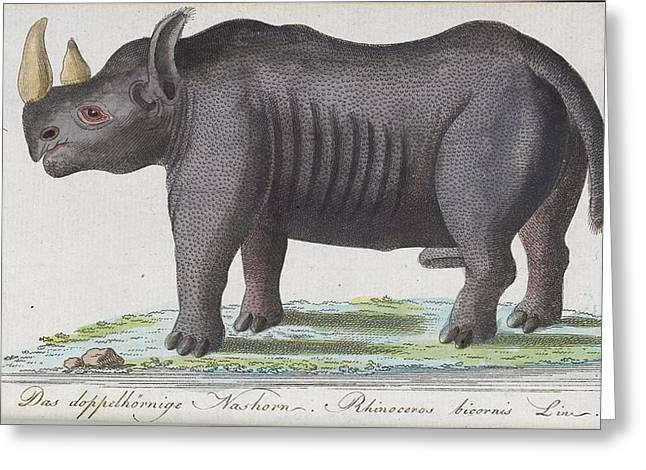 Rhinoceros Greeting Card by Celestial Images