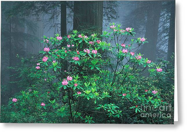 Rhododendrons Greeting Card by Ron Sanford