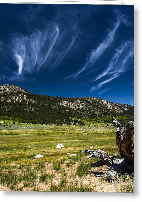 Riders In The Sky Greeting Card by Mitch Shindelbower