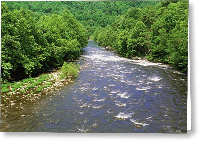 River Passing Through A Forest, Pigeon Greeting Card by Panoramic Images