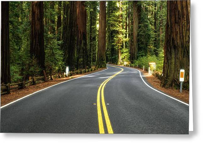 Road Winding Through Redwood Forest Greeting Card