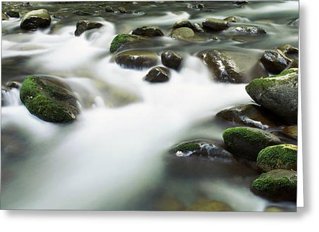 Rocks In A River, Little Pigeon River Greeting Card by Panoramic Images