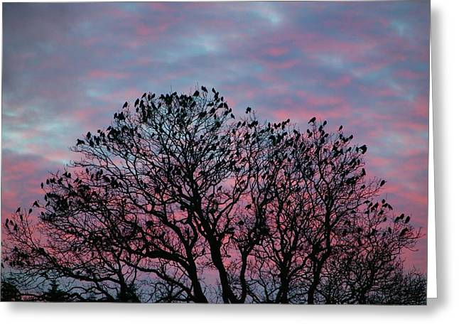 Rooks And Jackdaws At Sunset Greeting Card