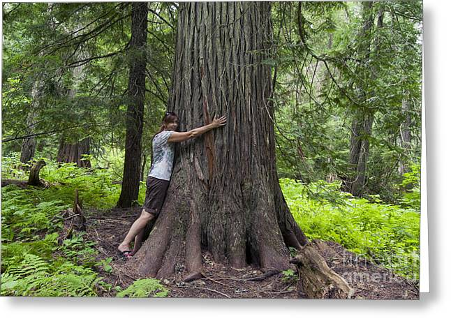 Roosevelt Grove Of Ancient Cedars, Idaho Greeting Card