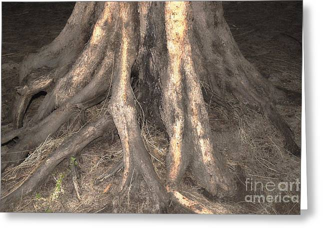 Roots Greeting Card by Cassandra Buckley