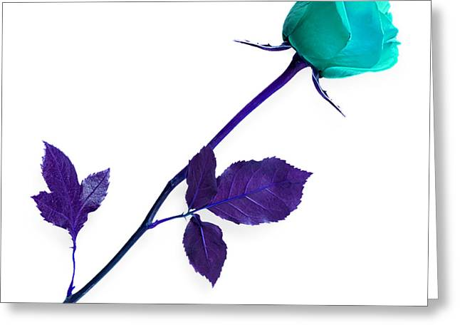 Rose Collection Greeting Card