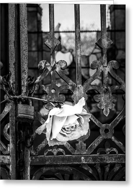 Rose In Remembrance 2 Greeting Card by Andy Crawford