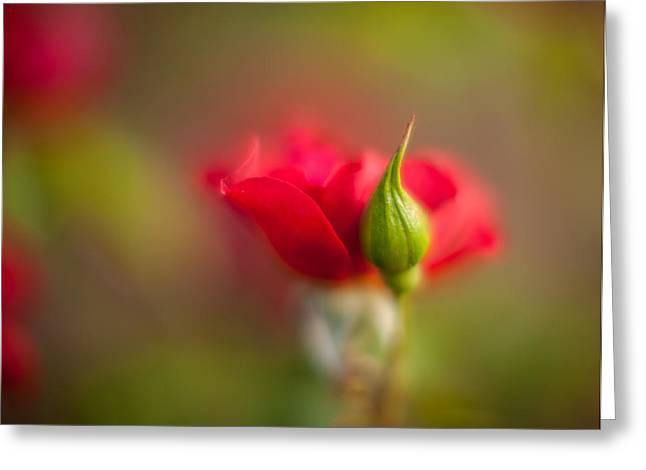 Rosebud Greeting Card by Mike Reid