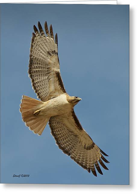 Roxborough Park Road Red Tail Hawk Greeting Card