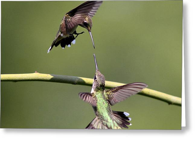 Ruby-throated Hummingbird Greeting Card by Travis Truelove