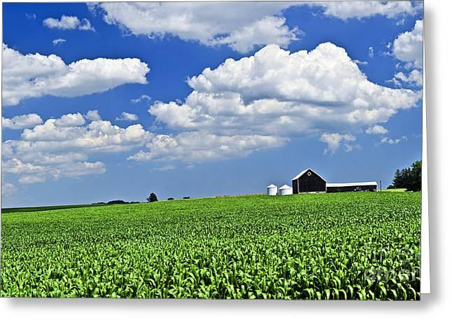 Rural Landscape Greeting Card by Elena Elisseeva