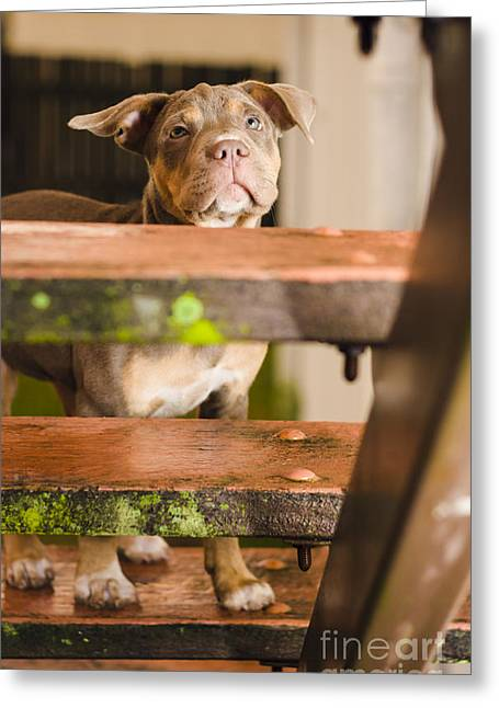 Sad Lost Puppy Dog Looking Up Steps Of A House Greeting Card by Jorgo Photography - Wall Art Gallery